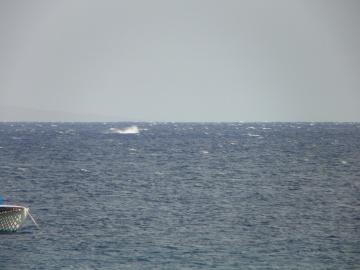Maui2012group2 067